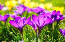Więcej o: W wiosennym nastroju – konkurs na wiersz o tematyce wiosennej i świątecznej.